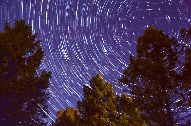 Nighttime drzewo z drogą mleczną fotografia royalty free