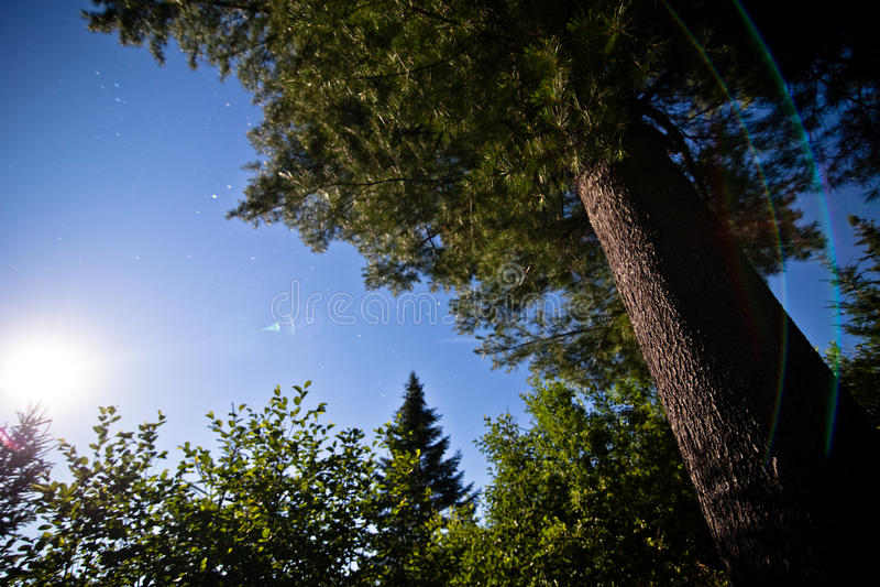 Nighttime i księżyc w pełni w lesie pod sosną fotografia stock