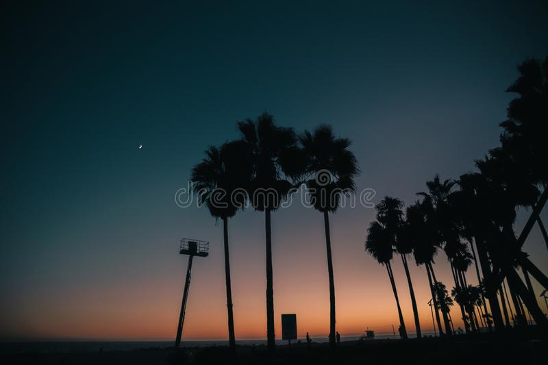 Nighttime scene sun just set and palm trees are silhouetted royalty free stock photo