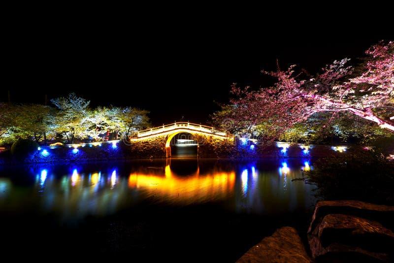 Nightview парка вишневых цветов стоковое изображение rf