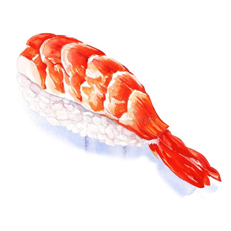 Nigiri sushi with shrimp vector illustration