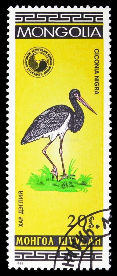 Nigra del Ciconia de la cigüeña negra, serie de los pájaros, circa 1985 foto de archivo