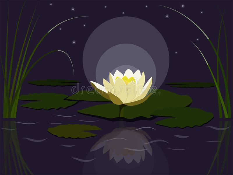 Nigth waterlily ilustracji