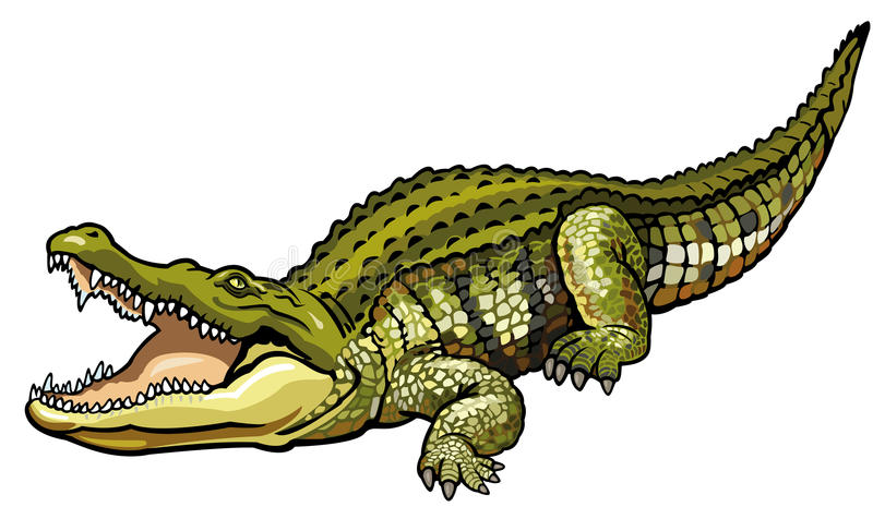 Nile crocodile. Crocodylus niloticus,wild animal of africa,side view picture isolated on white background stock illustration