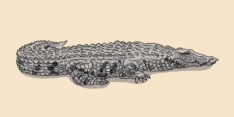 Nile crocodile. Vector illustration isolated on background. African reptile. Hand drawn vector sketch stock illustration