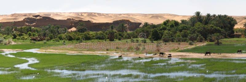 Nile riverside royalty free stock photos