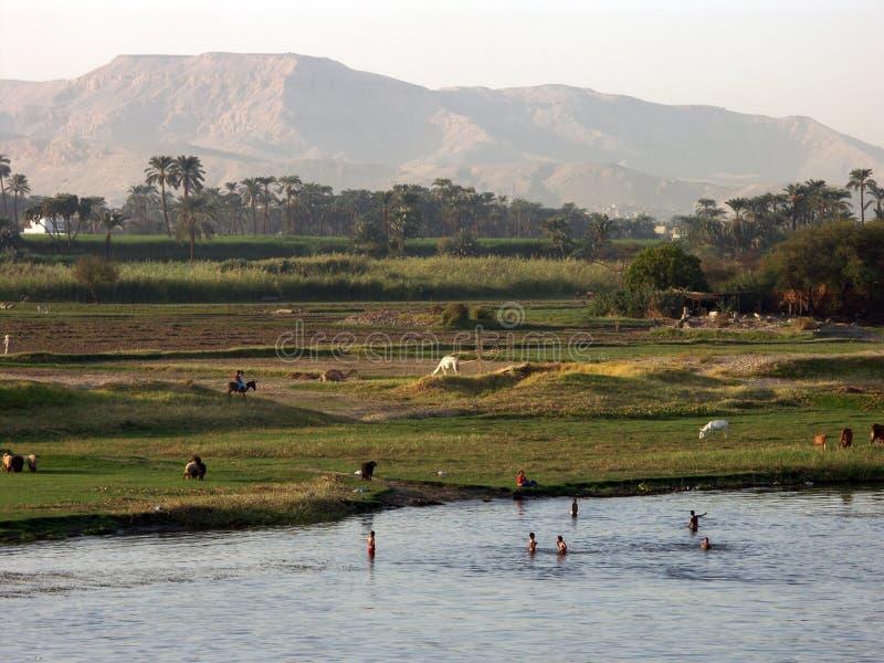 Nile shore stock image