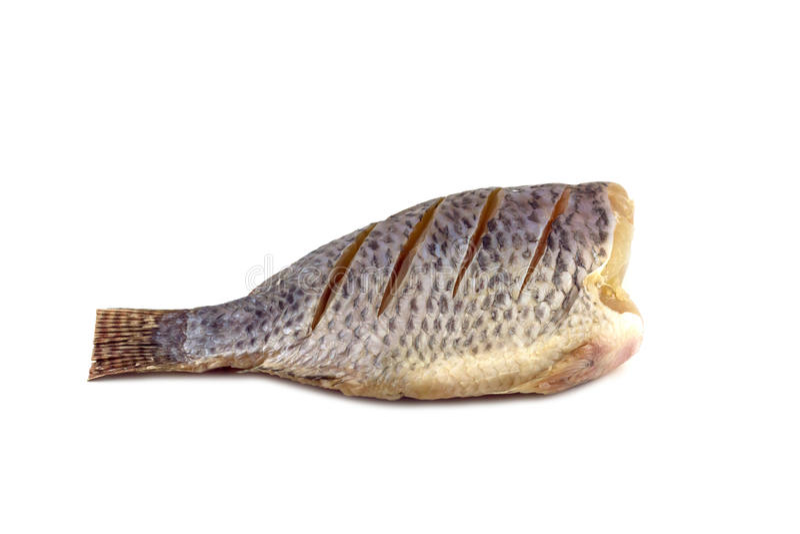 Nile Tilapia on a white background stock image