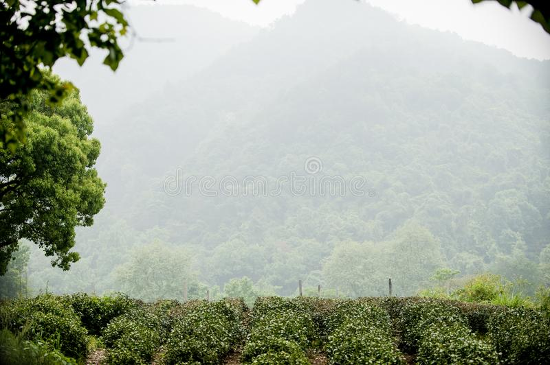 Nine creeks in misty forest. Jiuxi tobacco tree is one of the ten new sceneries of West Lake, commonly known as `Eighteen streams of Jiuxi`. Along the way, there stock images
