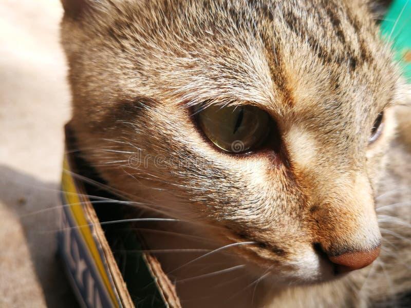 Nine lives. Cats  kitten closeup royalty free stock image