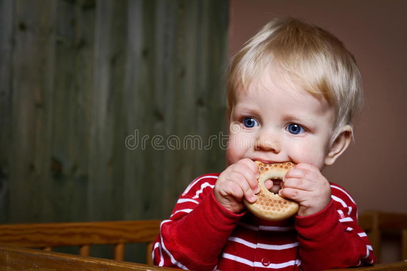 Nine month old baby boy eat biscuit royalty free stock images