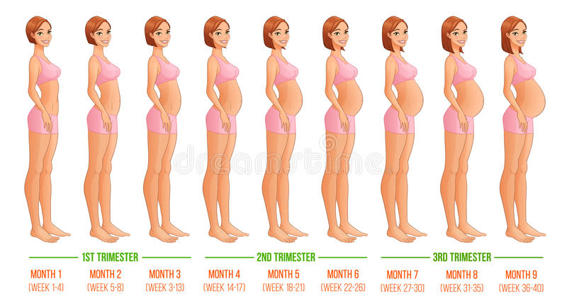 essays on nine months of pregancy Pregnancy lasts approximately 266 days (38 weeks) from the day of fertilization, but it is clinically considered to last 280 days (40 weeks 10 lunar months 9|n calendar months) from the first day of the last menstrual period.