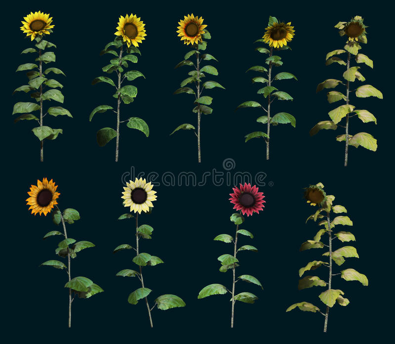 Nine Sunflowers 3d CG stock illustration