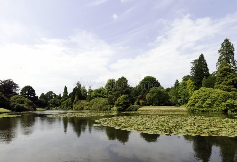 Ninfee - nymphaeaceae o travertino nel lago Shefield, Uckfield, Regno Unito fotografia stock libera da diritti