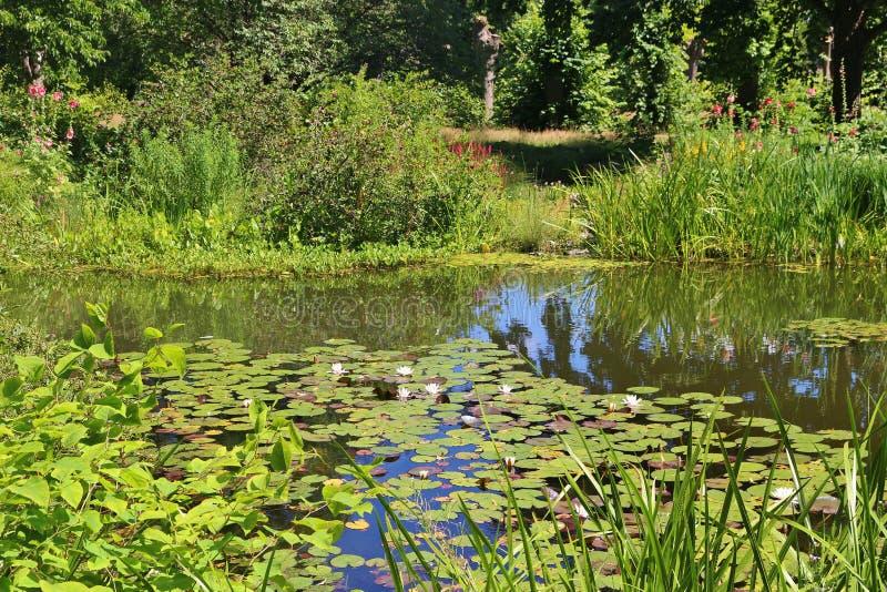 Ninfee in uno stagno ed in una vegetazione ricca intorno Hannover, Germania immagine stock libera da diritti