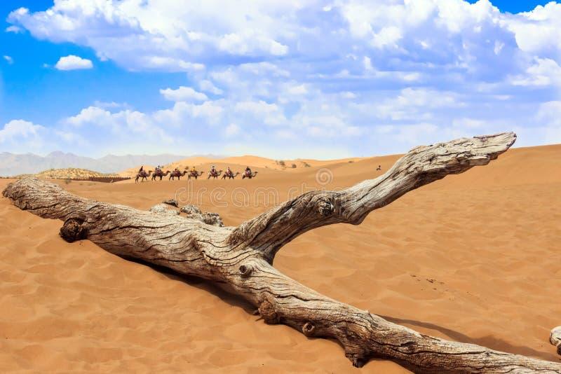 Ningxia-Landschaft lizenzfreie stockfotos