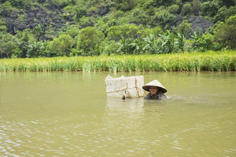 Ninh Binh, Vietnam - 16 mai 2015 : La femme vietnamienne attrape les mollusques et crustacés d'eau douce sur la rivière en Tam Co photo stock