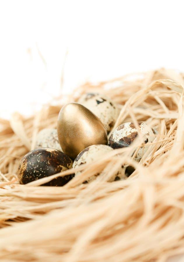 Ninho com os ovos de codorniz dourados e naturais foto de stock