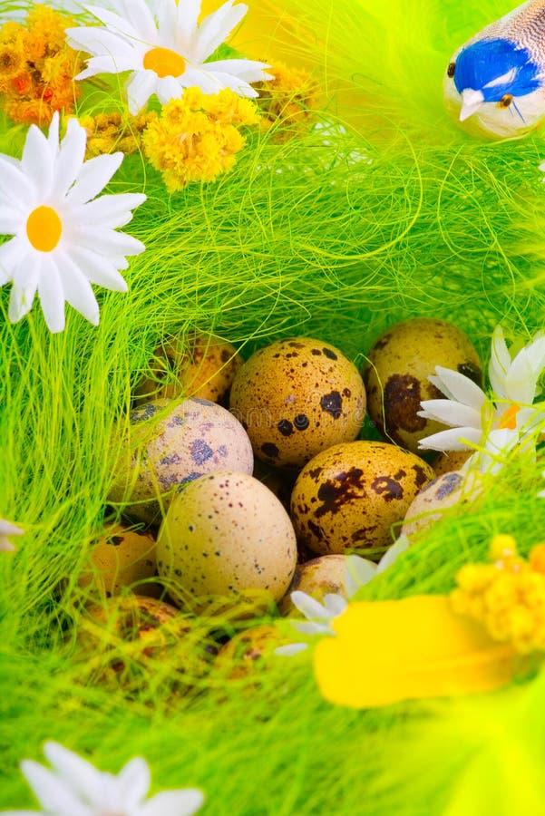 Ninho com os ovos que aming flores imagem de stock royalty free