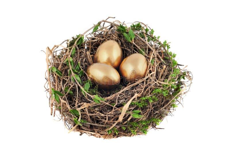 Ninho com ovos dourados imagem de stock royalty free