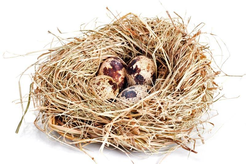Ninho com quatro ovos fotografia de stock