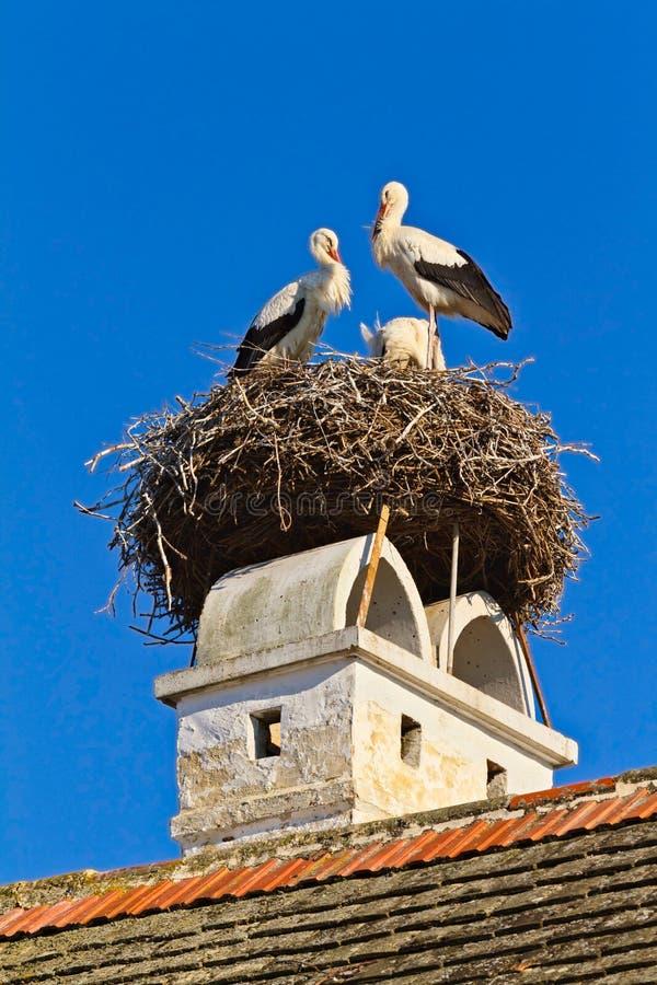 Ninho da cegonha em uma oxidação austríaca da vila imagem de stock royalty free