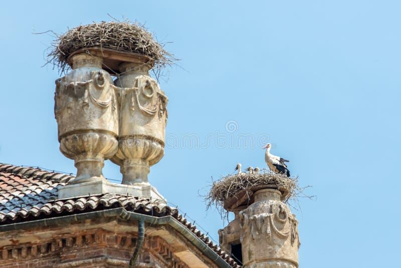Ninho das cegonhas no castelo de Racconigi fotos de stock