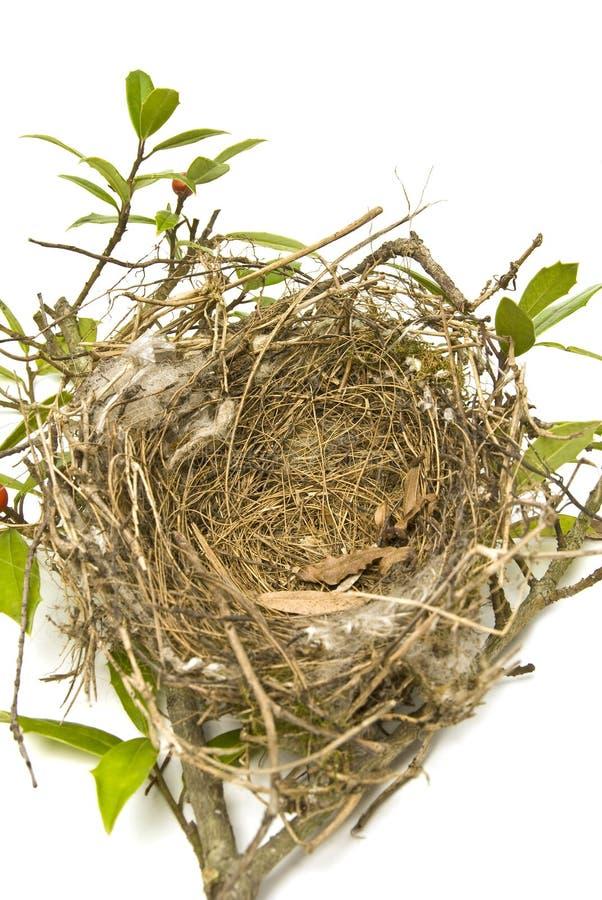 Ninho de Bird's imagem de stock royalty free