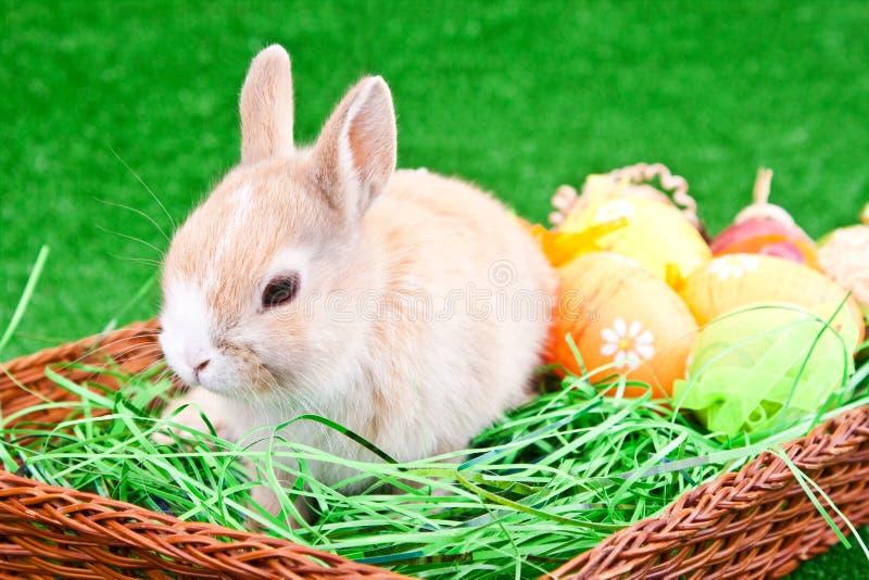 Ninho de Easter com coelho e ovos foto de stock royalty free
