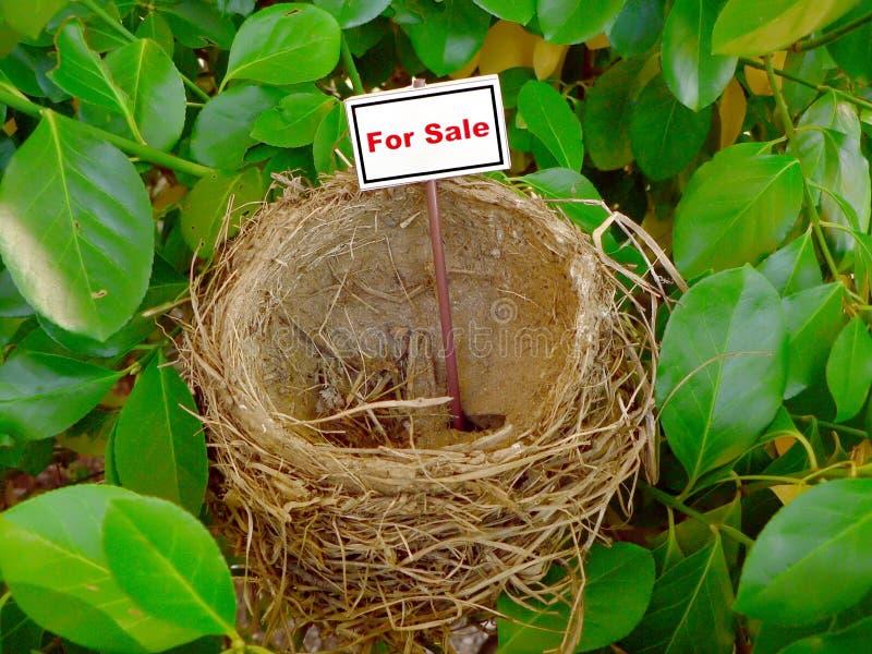 Ninho do pássaro - bens imobiliários 6 foto de stock royalty free