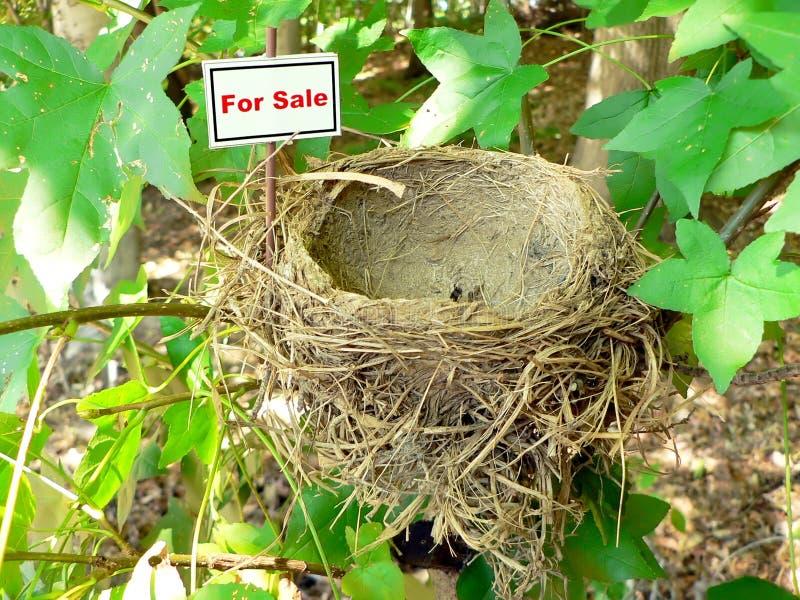 Ninho do pássaro - bens imobiliários 8 fotografia de stock royalty free