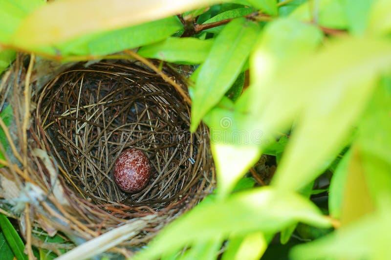 Ninho do pássaro com um ovo imagens de stock royalty free