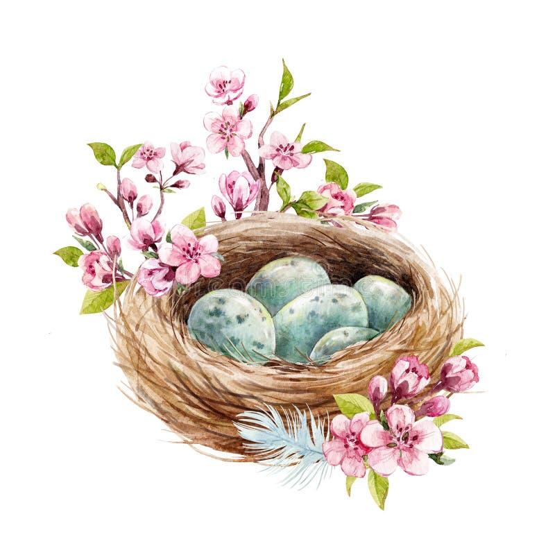 Ninho do pássaro da aquarela com ovos ilustração royalty free