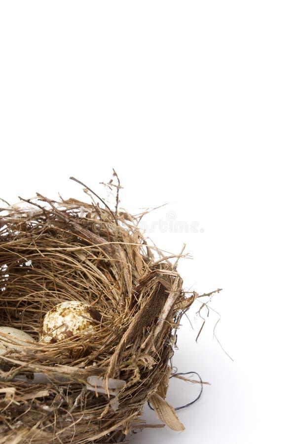 Ninho do pássaro e dois ovos fotografia de stock royalty free