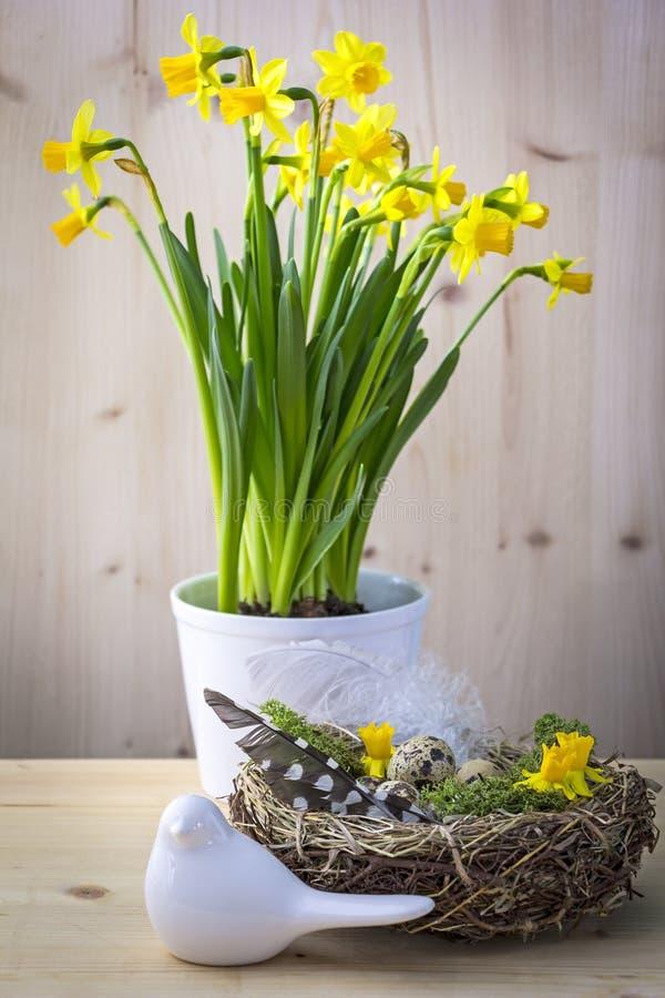 Ninho do pássaro em uma tabela com ovos e pena imagens de stock royalty free