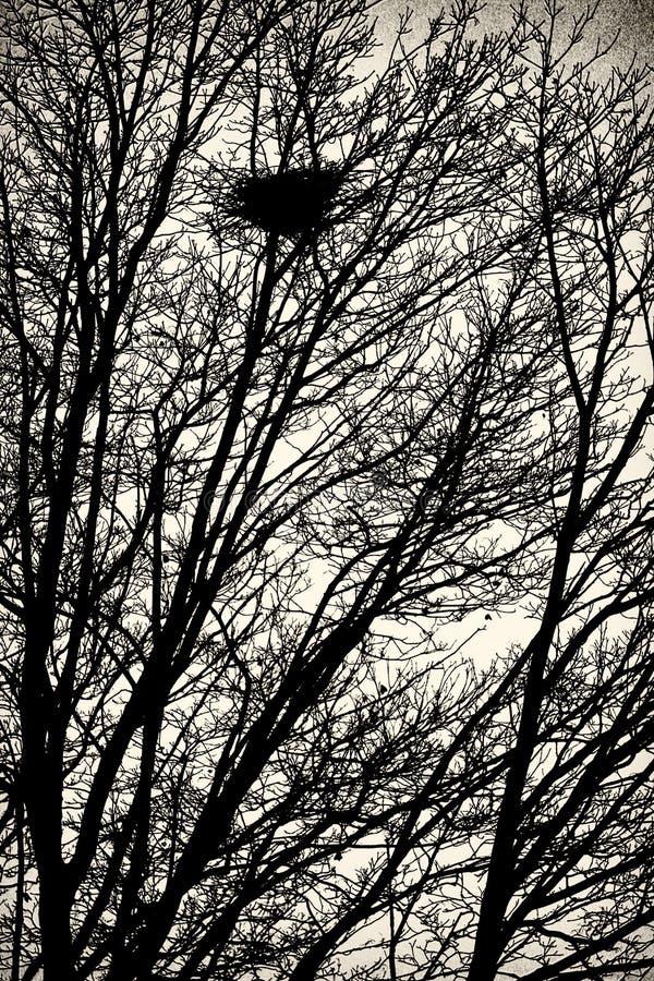 Ninho do pássaro na árvore imagens de stock royalty free
