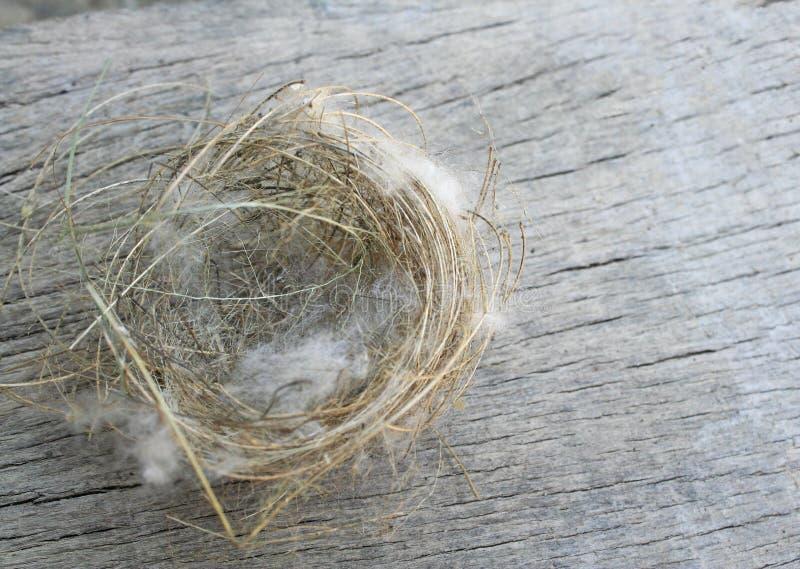 Ninho do pássaro, queda da árvore imagens de stock royalty free