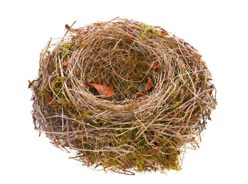 Ninho do pássaro vazio foto de stock royalty free