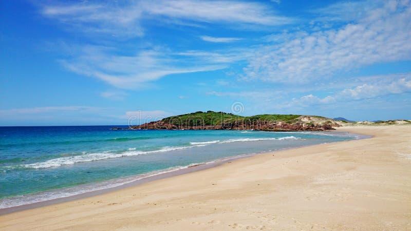 Ninho dos falcões da praia e do oceano @ fotografia de stock royalty free