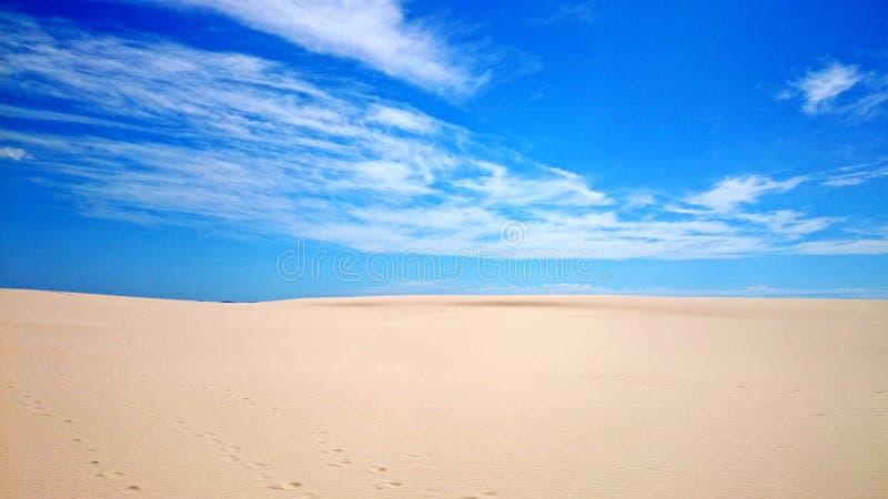 Ninho dos falcões do deserto @ fotos de stock