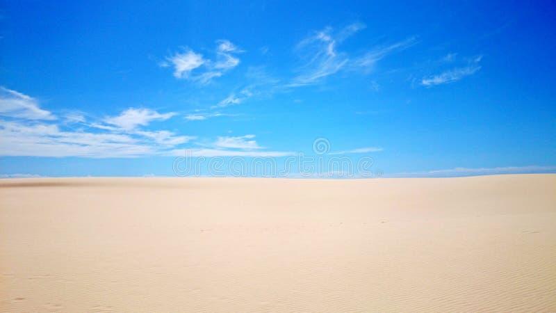 Ninho dos falcões do deserto @ foto de stock royalty free