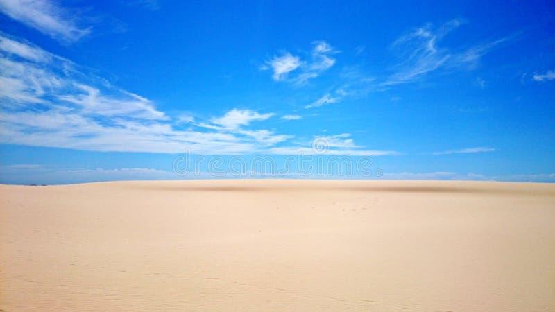 Ninho dos falcões do deserto @ fotografia de stock royalty free