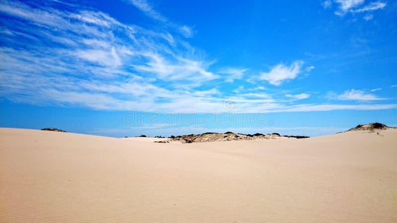 Ninho dos falcões do deserto @ fotografia de stock