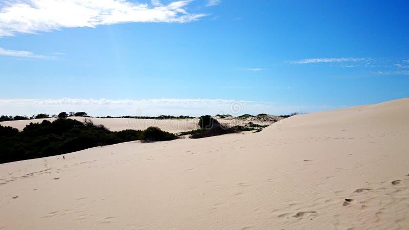 Ninho dos falcões do deserto @ imagem de stock royalty free