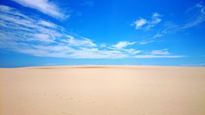 Ninho dos falcões do deserto @ foto de stock