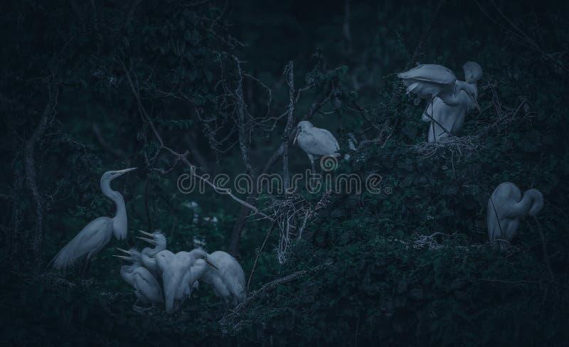 Ninho dos pássaros com os cachorrinhos no crepúsculo fotografia de stock