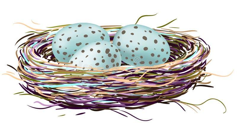 Ninho dos pássaros com ovos do pisco de peito vermelho ilustração do vetor