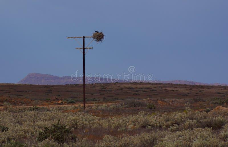 Ninho dos pássaros do interior, deserto Dawn Colors foto de stock