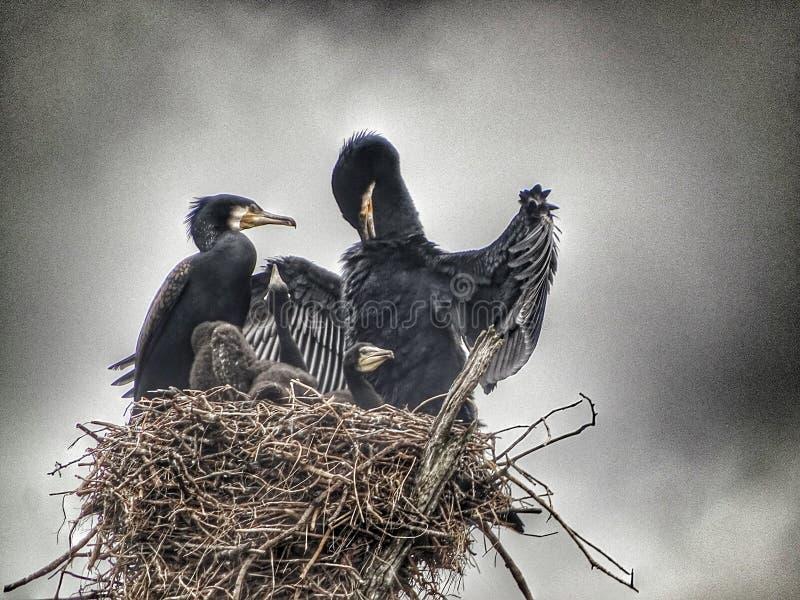 Ninho dos pássaros no lago Periyar em Kerala imagem de stock