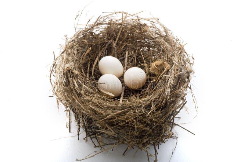 Ninho e ovos foto de stock royalty free